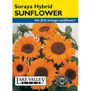 Soraya Hybrid Sunflower Seeds