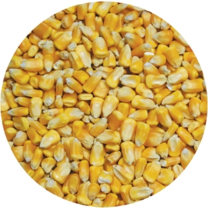 Local Deer Corn