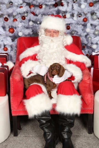 Santa Claus at Pet Palace
