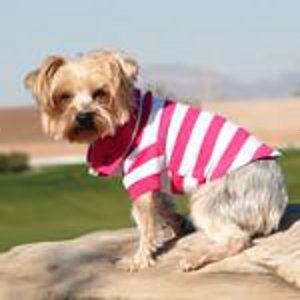 Striped Dog Polo - Pink Yarrow and White