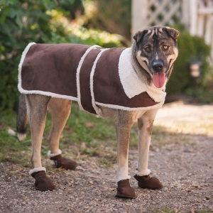 Outdoor Dog by Fashion Pet