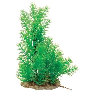 NATURAL ELEMENTS HORNWORT