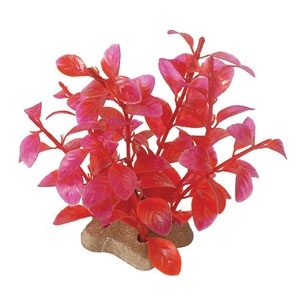 NATURAL ELEMENTS LUDWIGIA CRIMSON