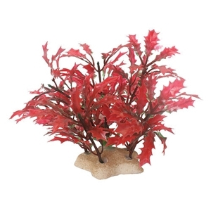 NATURAL ELEMENTS CRIMSON WATER HOLLY