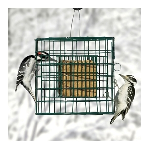 Hanging Suet Sanctuary Green