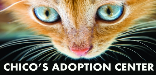 Fancy Cats Adoption Event