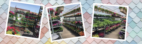 Flowers, Baskets, Perennials, and Vegetables Have Arrived!