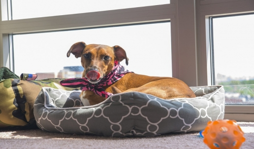 Enhancing Your Space for Your Pet