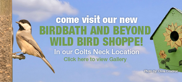 Visit Brocks Birdbath & Beyond banner for mobile