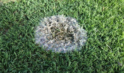Prevent Snow Mold