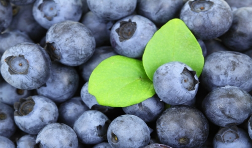 Four Fresh Blueberries to Grow This Summer