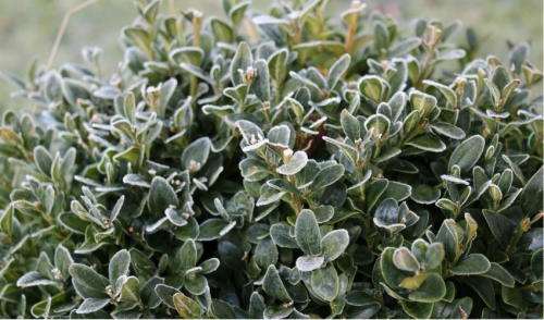 What Frost Means for Gardens