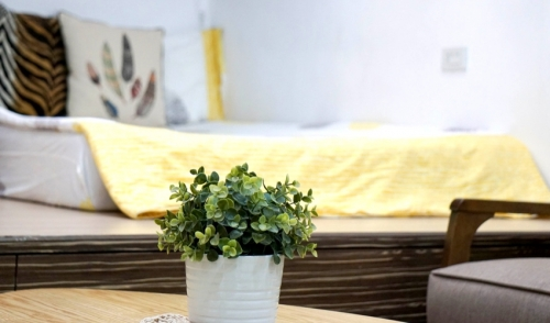 Houseplants for the Bedroom