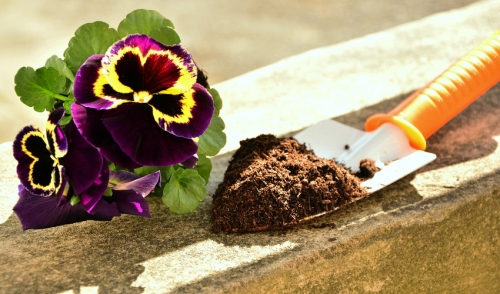 Spring Cleaning For Your Garden