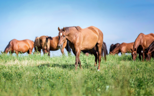 Pasture Management: More Than Green Grass