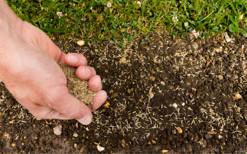 Guide to Planting Grass Seed