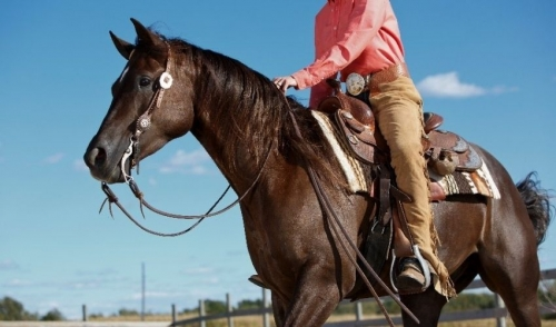 Conditioning Your Horse: 5 Types of Fitness