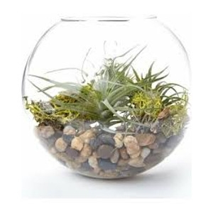 Wall Hanging Glass Terrarium Workshop