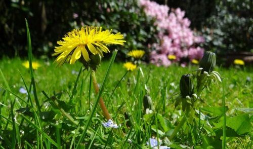 Guide to 7 Common Lawn Weeds