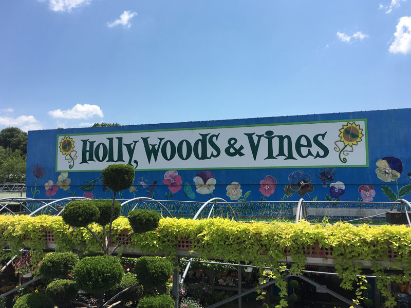 holly woods and vines