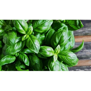 4 Inch Herbs Now 50% Off!