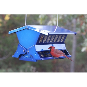 Absolute II Squirrel Proof Feeder