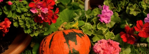 Happy Fall, Ya'll!