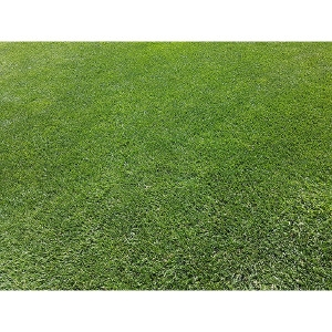 BFG Supply Shortcut Mix Grass Seed 25 lb.