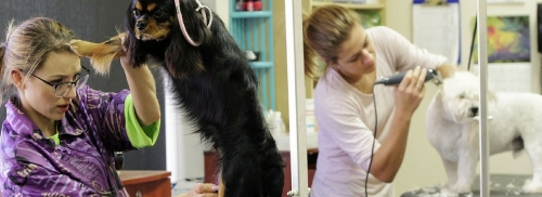 Terry's Pet Stop Professional Grooming Available